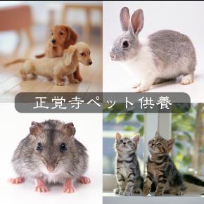 ペット供養画像