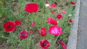 オオクラベーカリー近くのお花2