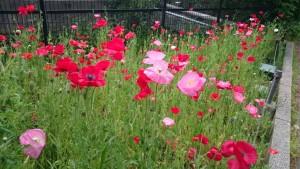 オオクラベーカリー近くのお花